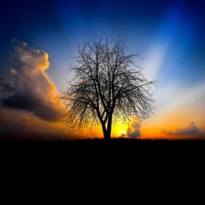 Sunrise-Tree-iPad-wallpaper-ilikewallpaper_com